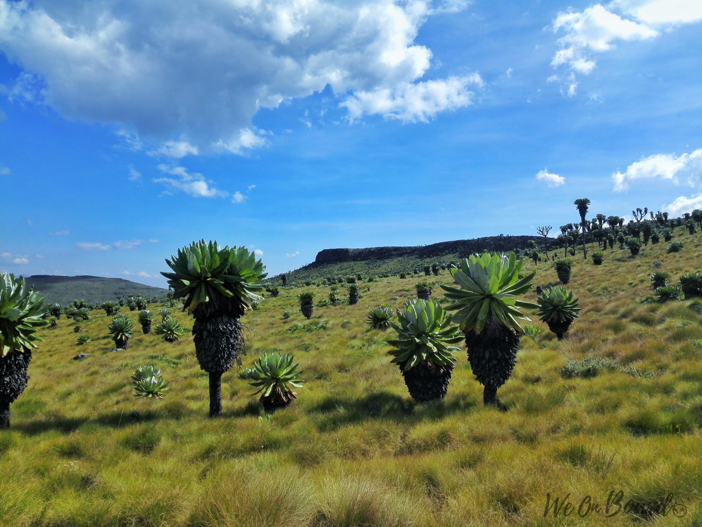 Photo of Rurimeria Vegetation